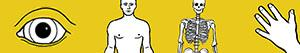 Disegni Corpo umano da colorare